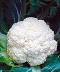 Cauliflower Minuteman